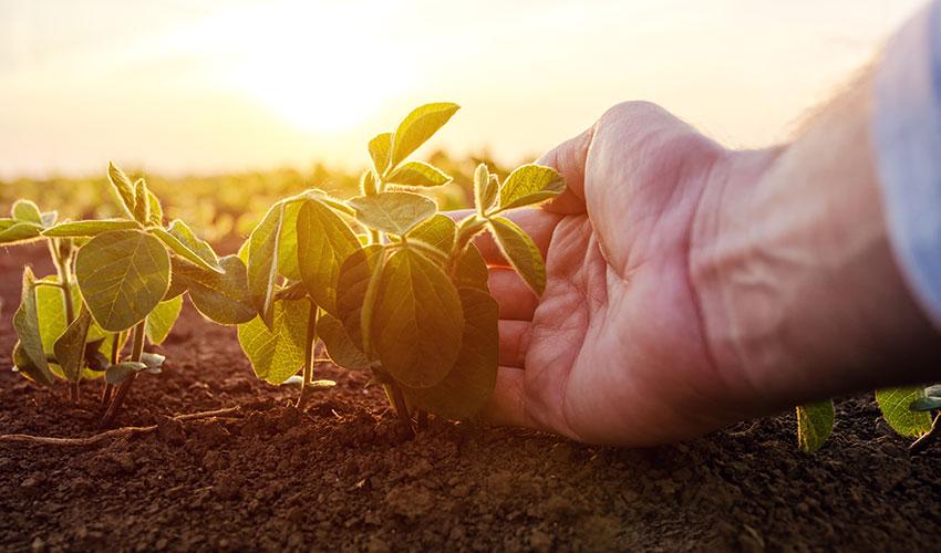 agricultura familiar pequeno agricultor