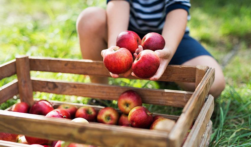 agricultura familiar organicos